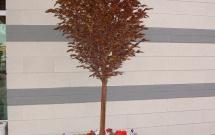 Planter PB9014
