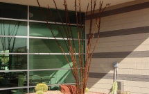 Yard Art Metal Ocotillo AR2565